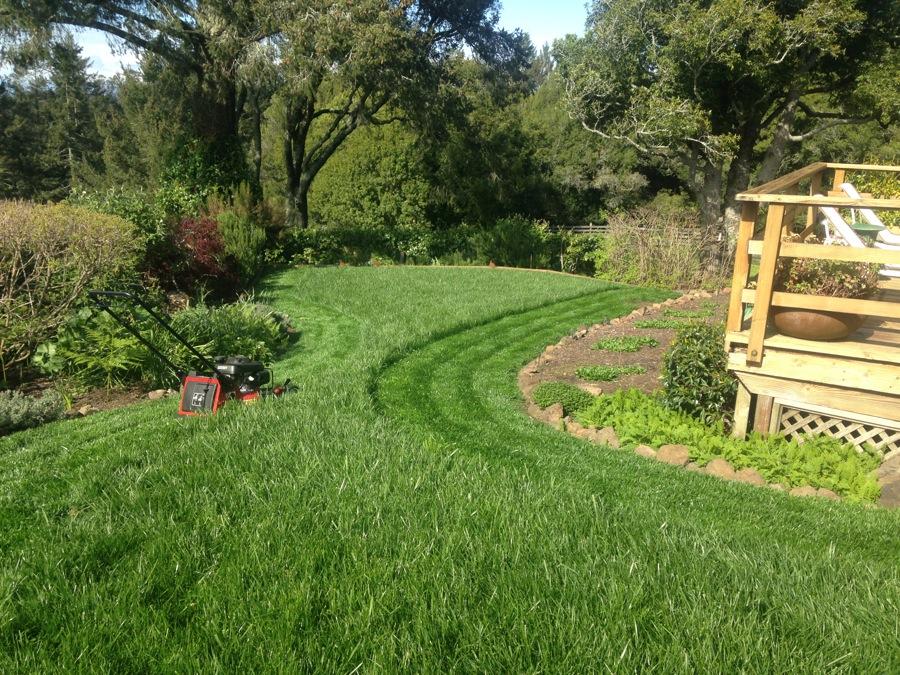 Healthy Organic lawn