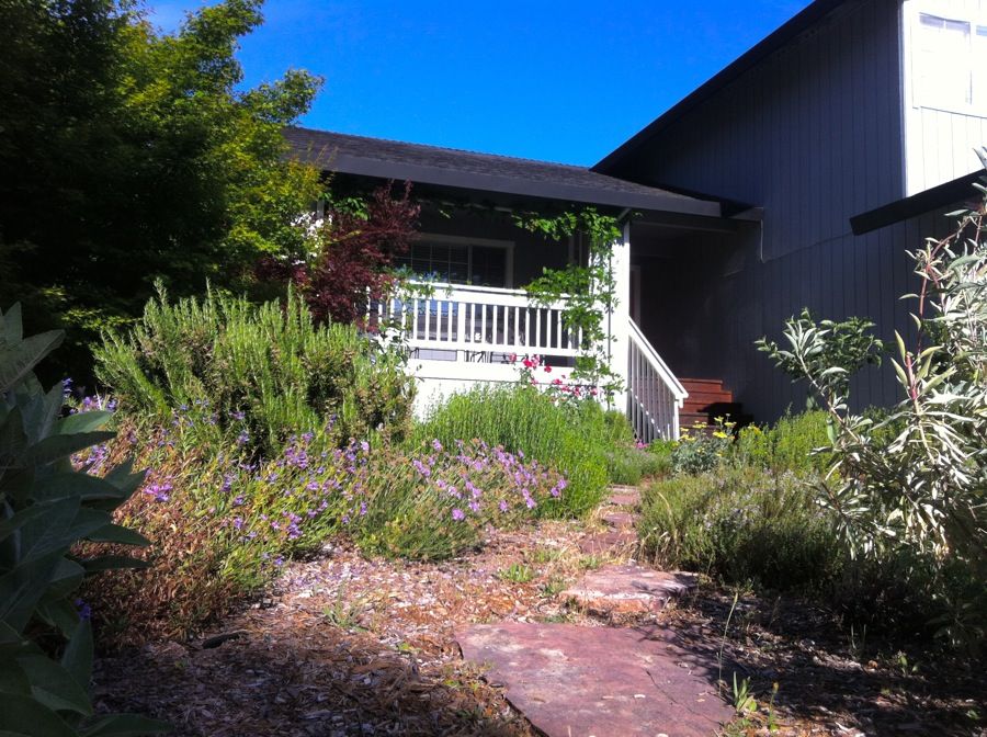 Lawn removal herbs edible Landscape Design Mindful Santa Rosa